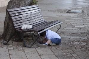 Boy Under a Bench